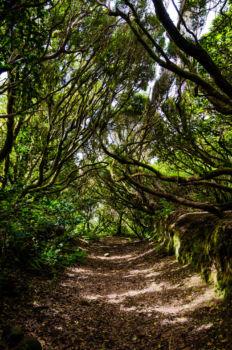 Tropický les v Anage