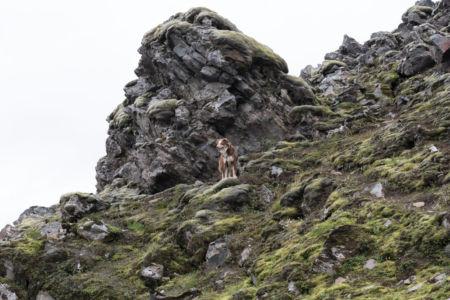 Psík na vychádzke v Dúhových horách