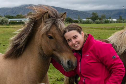 Islandský koník