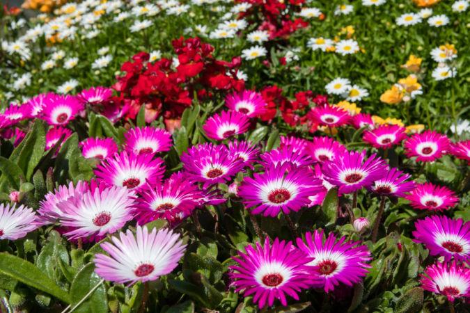 Kvetinová výzdoba v Isafjordure